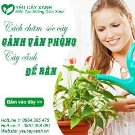 cach-cham-soc-cay-canh-van-phong
