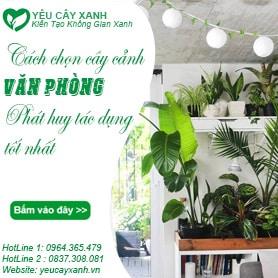 cach-chon-cay-canh-van-phong