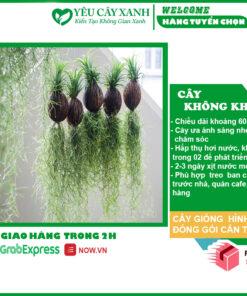 ANH CAY KHONG KHI